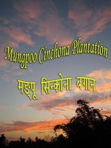Mungpoo Cinchona Plantation
