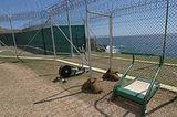 camp iguana