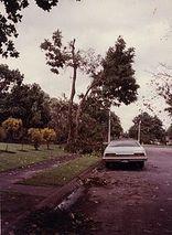 Typhoon Irma (1981)