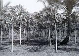 south jakarta