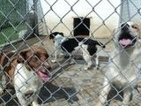 How to Get Government Grants For Animal Shelters