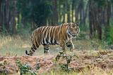 Wildlife Parks India