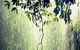 Monsoon Videos
