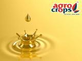 Peanut Oil Exporters in India