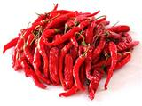 Indian Red Dry Chilli Exporters