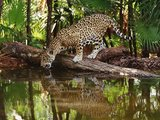 Rejuvenate Yourself with Wildlife Tours