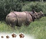 Kaziranga Wildlife Tours with indiatouritinerary com