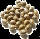 Hemp Seed Oil india