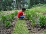 jammu - jammu & kashmir Medicinal Plants Introduction Centre