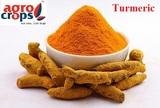 turmeric powder exporters in india - Best Turmeric Powder Exporters in India