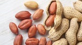 Premium Peanuts Suppliers in India