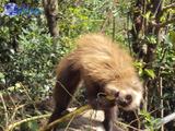 inca trail peru grand travel