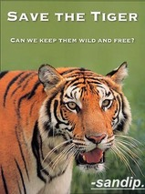 SAVE TIGERS....The Journey Begins...