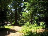 San Mateo Arboretum