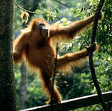 Tropical Rainforest Heritage of Sumatra