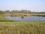 Fowlmere RSPB reserve
