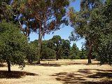 Stanford University Arboretum