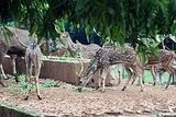 Dhaka Zoo