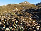 Flora of Svalbard